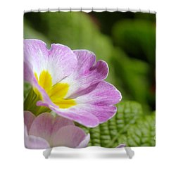 Side View Of A Spring Pansy Shower Curtain by Jeff Swan