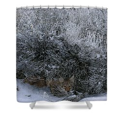 Silent Accord Shower Curtain