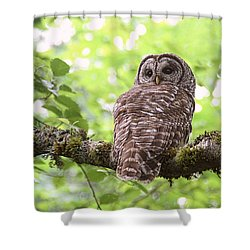 Silent Watcher Of The Woods Shower Curtain