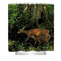 Shower Curtain featuring the digital art Silently by I'ina Van Lawick