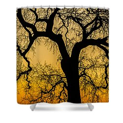 Silhouette Oak Shower Curtain