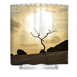 Silhouetted Tree At Dawn In Aruba Shower Curtain