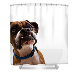 Silly Boxer Dog Shower Curtain by Stephanie McDowell