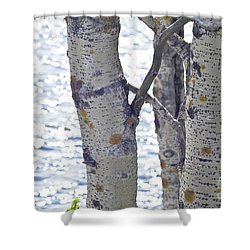 Silver Birch Trees At A Sunny Lake Shower Curtain