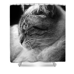 Silver Lynx Point Shower Curtain