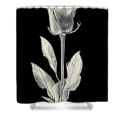 Silver Rose Shower Curtain by Adam Romanowicz