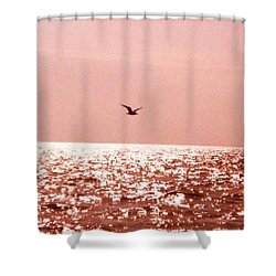 Silvery Seagull Solo Flight Shower Curtain by Belinda Lee