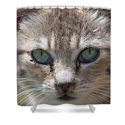 Silver Tabby But What Color Eyes Shower Curtain