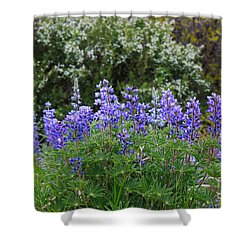 Shower Curtain featuring the photograph Silvery Lupine Black Canyon Colorado by Janice Rae Pariza