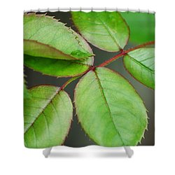 Simple Elegance Shower Curtain by Frozen in Time Fine Art Photography