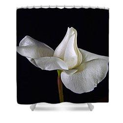 Simple In White Shower Curtain by Elsa Marie Santoro