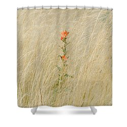 Simple Splash Of Color Shower Curtain