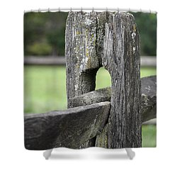 Simplicity Shower Curtain by Lisa Phillips