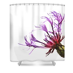 Simplicity Shower Curtain by Tammy Schneider