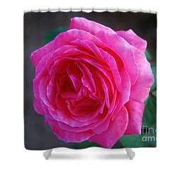 Simply A Rose Shower Curtain