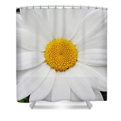 Shower Curtain featuring the photograph Simply by Natalie Ortiz