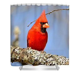 Shower Curtain featuring the photograph Simply Red by Deena Stoddard