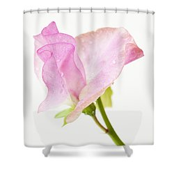 Simply Sweet Pea Shower Curtain by Anne Gilbert
