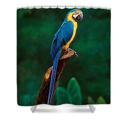 Singapore Macaw At Jurong Bird Park  Shower Curtain by Anonymous