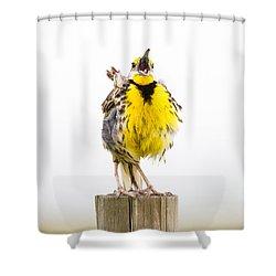Singing Meadowlark 2 Of 3 Shower Curtain by Bill Swindaman