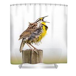 Singing Meadowlark 3rd Of 3 Shower Curtain by Bill Swindaman