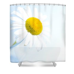 Single Daisy Flower In Vase Shower Curtain by Sabine Jacobs