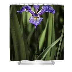 Single Iris Shower Curtain by Penny Lisowski