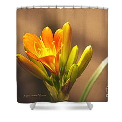 Single Kaffir Lily Bloom Shower Curtain