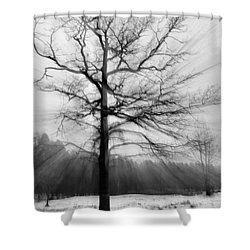 Single Leafless Tree In Winter Forest Shower Curtain