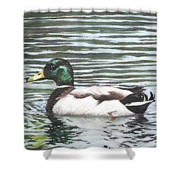 Single Mallard Duck In Water Shower Curtain by Martin Davey