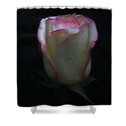 Shower Curtain featuring the photograph Single Pink Shade Rose by Tina M Wenger
