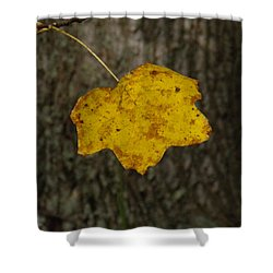 Shower Curtain featuring the photograph Single Poplar Leaf by Nick Kirby