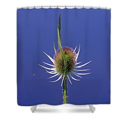 Single Teasel Shower Curtain