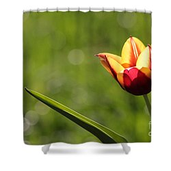Single Tulip Shower Curtain