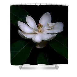 Sweet White Magnolia Bloom Shower Curtain by Louise Kumpf