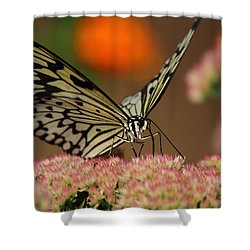 Sip Of The Nectar Shower Curtain by Randy Hall