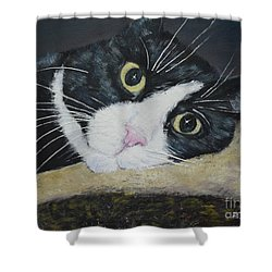 Sissi The Cat 3 Shower Curtain