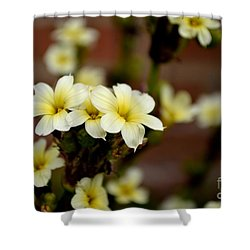 Sisyrinchium Striatum Shower Curtain