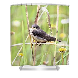Shower Curtain featuring the photograph Sitin' Pretty by Elizabeth Winter