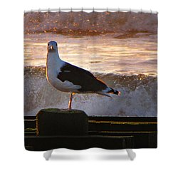 Sittin On The Dock Of The Bay Shower Curtain by David Dehner