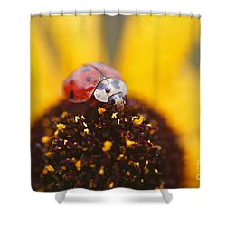 Sitting Pretty Shower Curtain by Darren Fisher