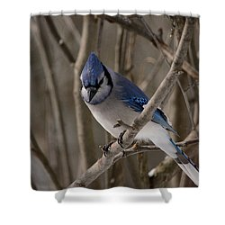 Shower Curtain featuring the photograph Sitting Pretty by David Porteus