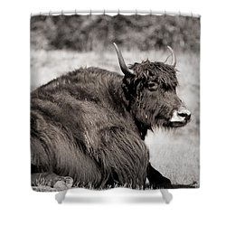 Sitting Strong Shower Curtain by Melanie Lankford Photography