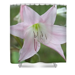 Six Point Flower Shower Curtain