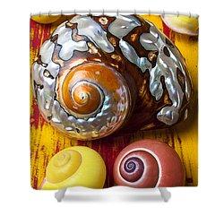 Six Snails Shells Shower Curtain by Garry Gay