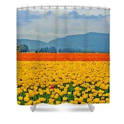 Skagit Valley Tulip Field Shower Curtain