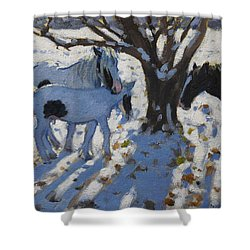 Skewbald Ponies In Winter Shower Curtain by Andrew Macara