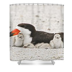 Skimmer Family Cuddle Shower Curtain
