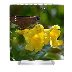 Skipper Butterfly 2 Shower Curtain by Debra Martz