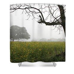 Skc 0060 Framed Tree Shower Curtain by Sunil Kapadia